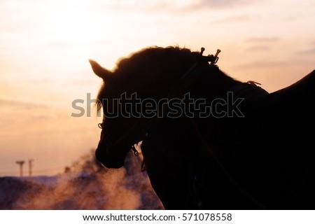 horse race in hokkaido #571078558