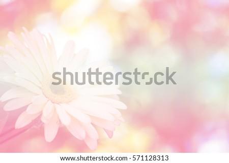 flower soft focus background #571128313