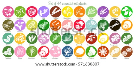 Big icon set of 44 popular essential oil labels. white silhouettes. Ylang-ylang, eucalyptus, jasmine, rose, sandalwood, patchouli etc. For cosmetics, spa, health care aromatherapy homeopathy Ayurveda #571630807