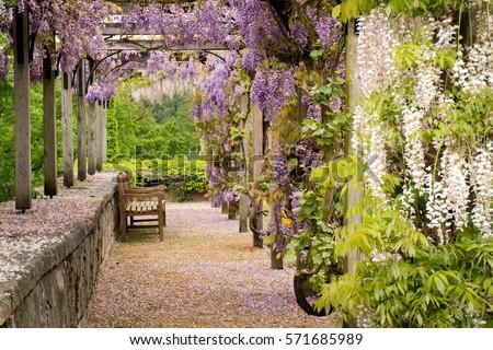 garden #571685989