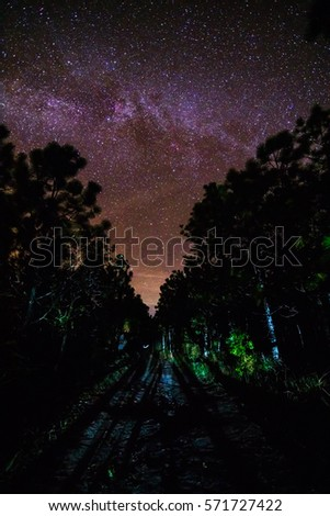 Milky Way and some trees #571727422