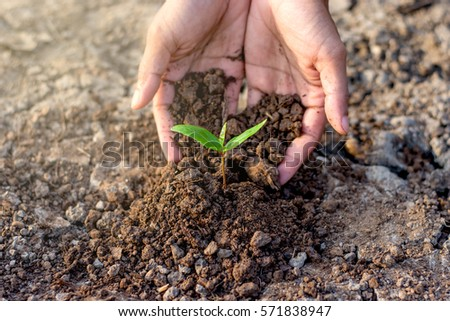 Men hands are planting the seedling into the soil,ecology concept. #571838947