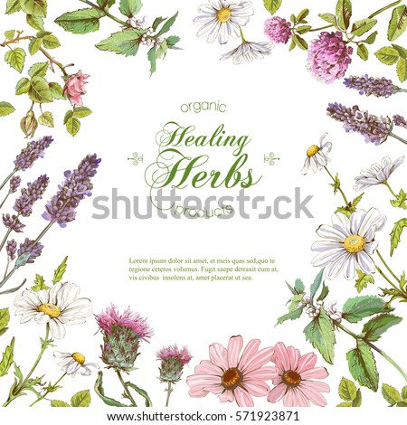 Vector healing flowers and herbs frame. Design for herbal tea, natural cosmetics, perfume, health care products, homeopathy, aromatherapy. With place for text Royalty-Free Stock Photo #571923871