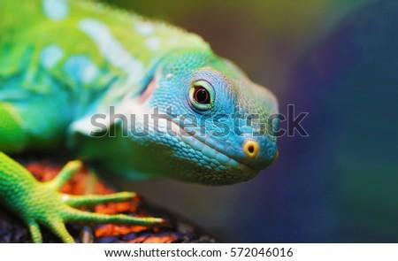 Lizard close up macro animal portrait photo #572046016