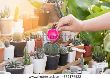 woman watering a plant with watering plastic cup, pours on cactus #572179822