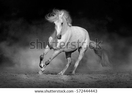 Horse in motion in desert  against dramatic dark background. Black and white picture