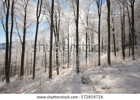 Winter forest on a sunny morning. #572854726