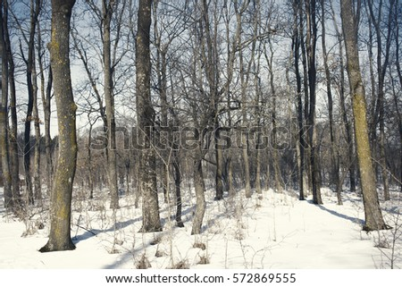 forest in winter time  #572869555
