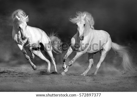 Cople horse in motion in desert  against dramatic dark background. Black and white picture
