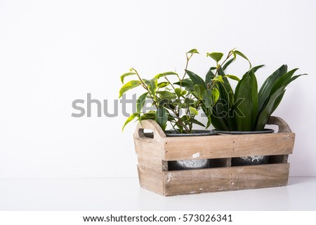 Home green plants in wooden box #573026341