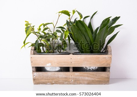 Home green plants in wooden box #573026404