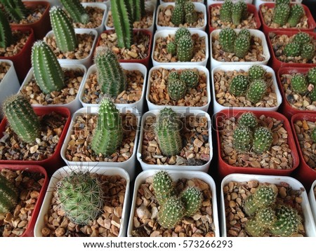 cactus tree #573266293