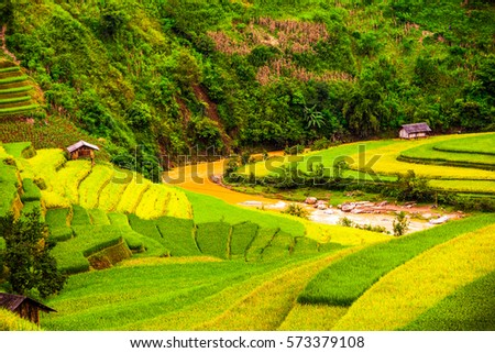 natural landscape with the terraced fields on the slopes in Tu Le Valley- Mu Cang Chai- Northwestern, Vietnam   #573379108