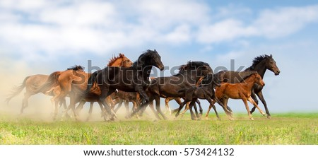 Horse herd run on pasture against beautiful blue sky #573424132