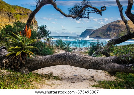 Nature around The Hole in the Wall at Coffee Bay in the Wild Coast, Republic South Africa. Royalty-Free Stock Photo #573495307