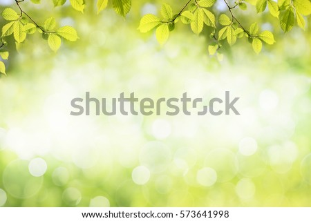 Fresh green tree leaves, frame. Natural background.