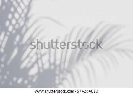 abstract background of shadows palm leaves on a white wall. White and Black #574284010