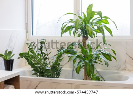 Watering and washing indoor plants in the bath #574459747