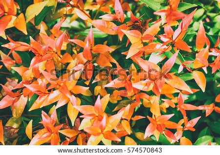 Close-up of fresh leaves for background, Design for the background #574570843
