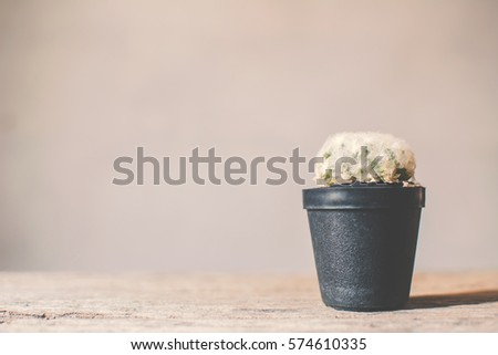 Little beautiful cactus  wood background , hipster tone, soft focus #574610335