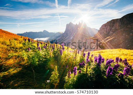 Calm view of the alpine hill in sunlight. Great and gorgeous morning scene. Location place Puez-Odle National Park, Gardena, Seceda peak, Geisler Dolomiti group. Tyrol, Italy, Europe. Beauty world.