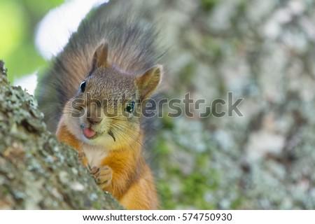 Funny Squirrel Closeup