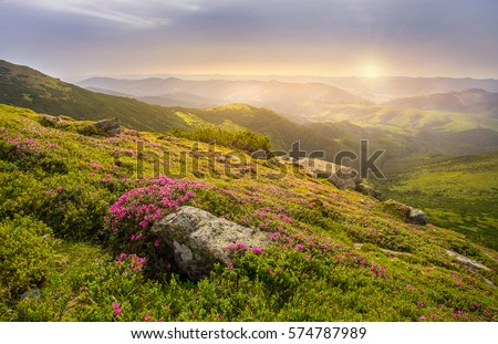 Spring landscape in mountains with Flower of a rhododendron and the morning sun Royalty-Free Stock Photo #574787989