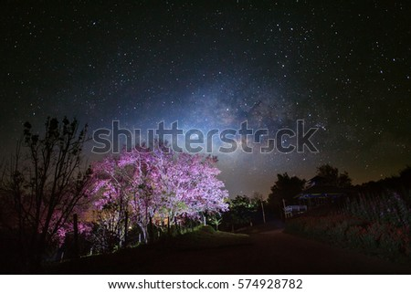 Milky Way Galaxy and Cherry blossom pathway in Khun Wang ChiangMai, Thailand.Long exposure photograph.With grain #574928782