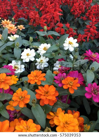 Colorful flowers, texture, background #575039353