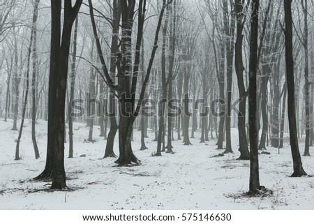 Frozen foggy winter forest #575146630