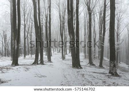 Path in frozen foggy winter forest #575146702
