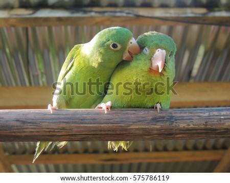 Animal Love #575786119