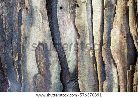 The bark of a young coastal redwood, Sequoia sempervirens- texture or background #576370891