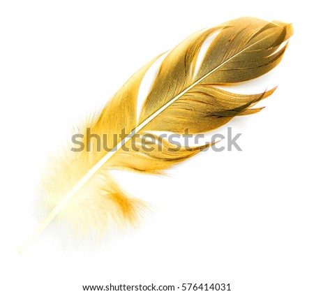 bird feather on white background #576414031