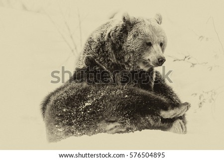 Brown Bears (Ursus arctos) in Lake Clark National Park, Alaska, USA, vintage filter #576504895