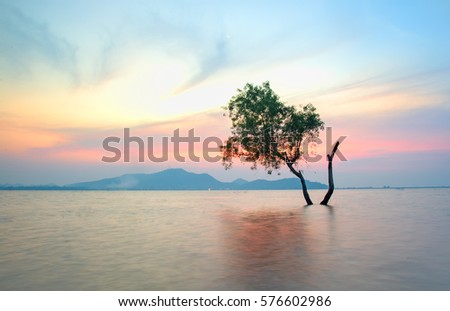 Alone alive tree is in the flood water of lake at sunset scenery in reservoirs, overflowing