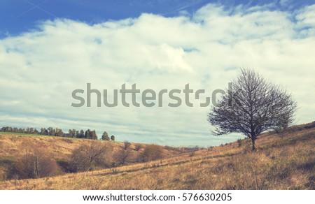 Autumn scene with lone tree #576630205