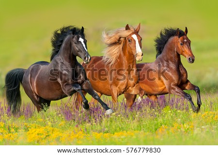 Horses run gallop in flower meadow  Royalty-Free Stock Photo #576779830