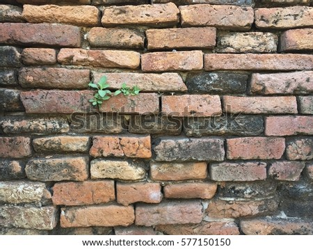 Texture of wall brick, which made from baked clay #577150150