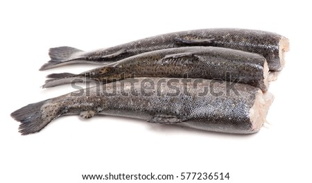 Gutted trout fishes isolated on white background #577236514