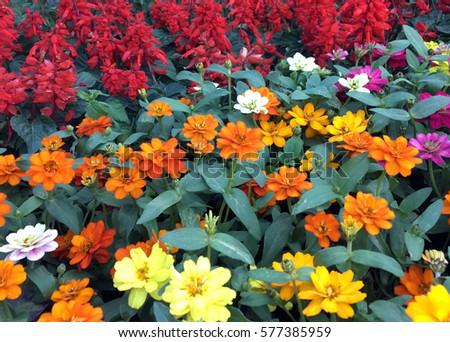 Beautiful flower,texture,background #577385959