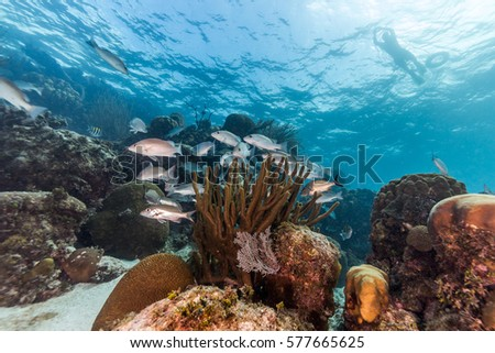 Snorkeling a marine reserve Royalty-Free Stock Photo #577665625