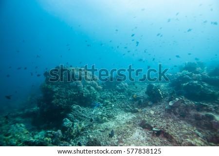 Under the Sea #577838125