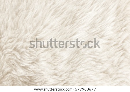Texture of white shaggy fur. Royalty-Free Stock Photo #577980679