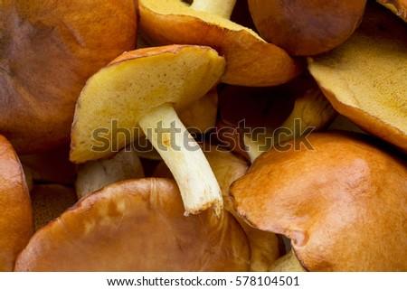 the edible mushrooms #578104501