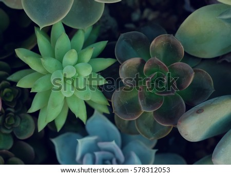 A group of Miniature succulent plants - vintage effect style. #578312053