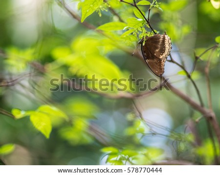Brown  Butterfly on Tree With Green Background #578770444