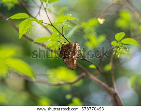 Brown  Butterfly on Tree With Green Background #578770453