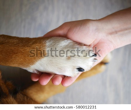 Dog paws and human hand close up, top view. Conceptual image of friendship, trust, love, the help between the person and a dog. #580012231