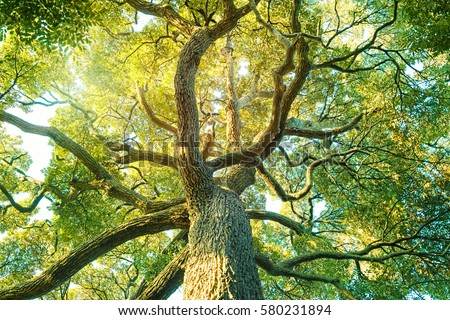 Tree,forest, Camphor, ecology image Royalty-Free Stock Photo #580231894